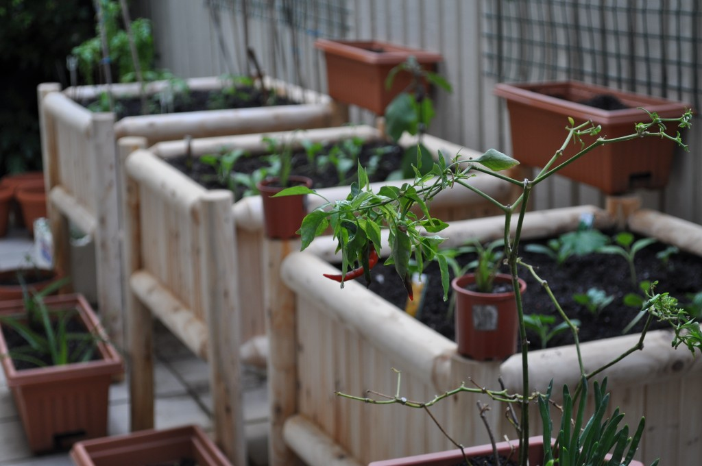 Growing vegetables in a courtyard the wood flower patch for Vegetable patch design ideas
