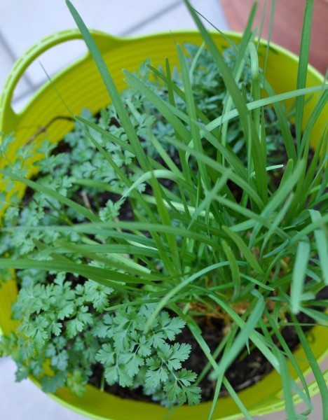 Chives and parsley