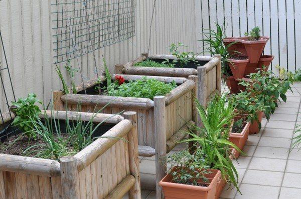My edible garden